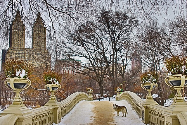 Bow Bridge Central Park December. 2020