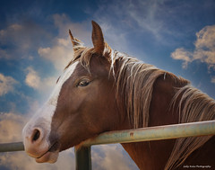 Equine Portrait - EXPLORED  (由  sallywagnerhale