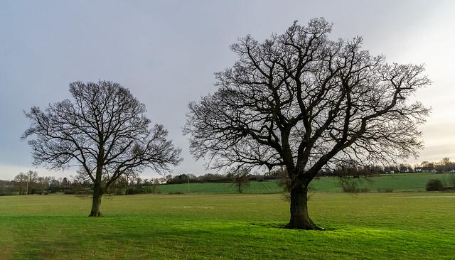 Tree Branch Capillaries