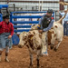 Dripping Springs Bull Rider