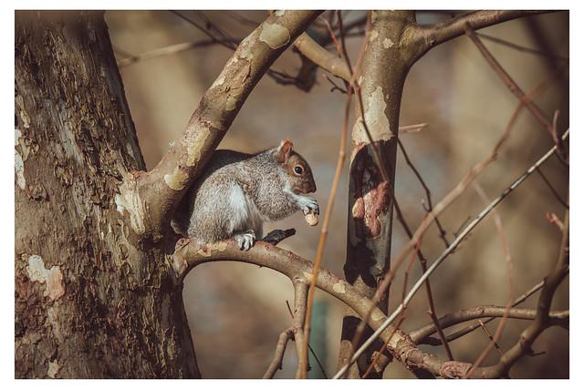 To Eat in Secret - Chestnut Hill, Philadelphia - PA_Web 1_Scaled