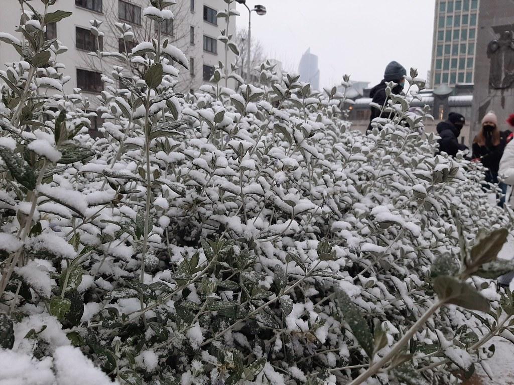 Nieve en Rue de l'Ommegang