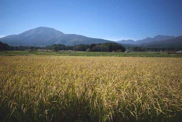 Iizuna and Togakushi volcanoes across rice paddy in Shinano-machi