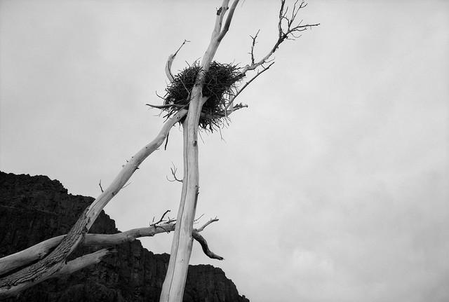 Nest, Columbia River Gorge, Washington