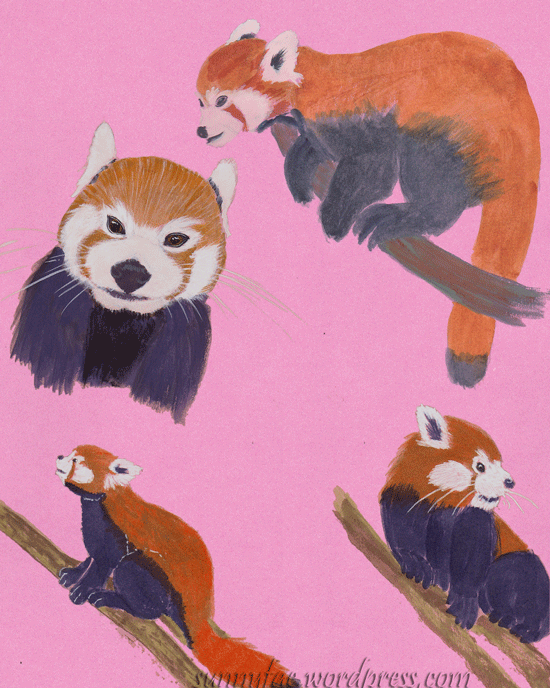 watercolour red panda sketches