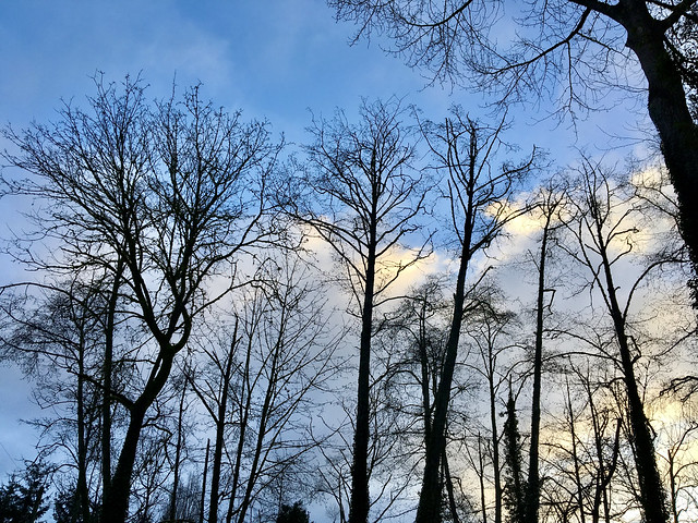 17/365: Bare Trees and Sky