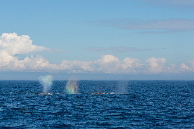 Armchair Traveling - Whale Watching in Monterey Bay