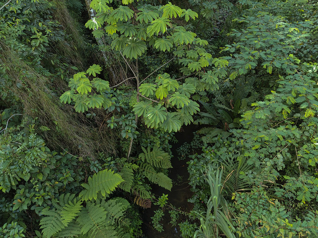 Costa Rica Rain Forest, Sarapiqui