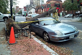 Honda Prelude destroyed by falling tree | by SchuminWeb