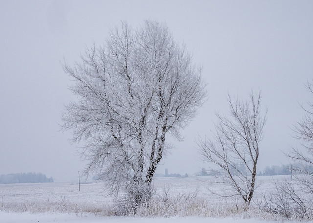 Winter Silhouettes-30954