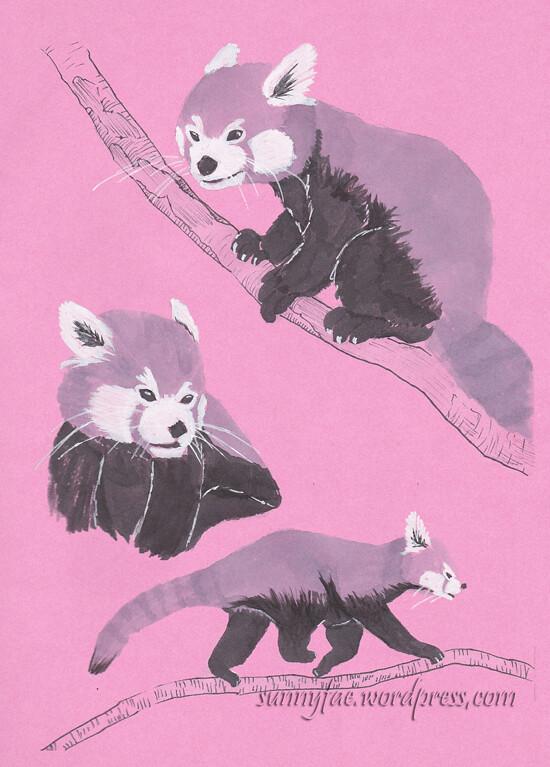 3 monotone panda  sketches