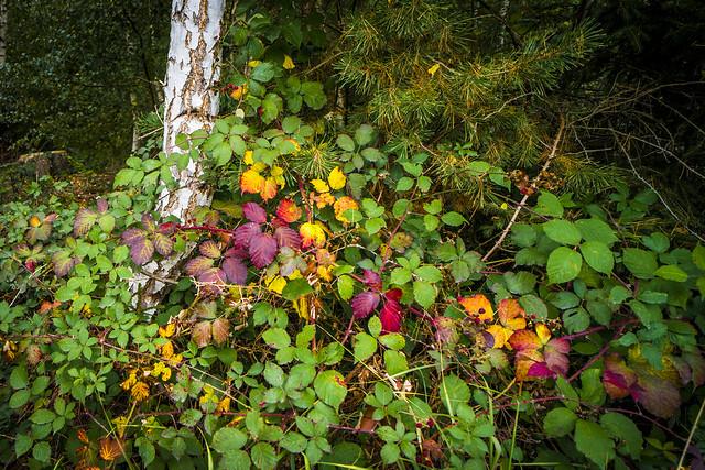 Herbstidylle , Autumn idyll