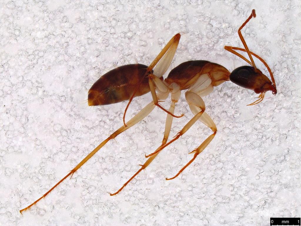 24a - Formicidae sp.