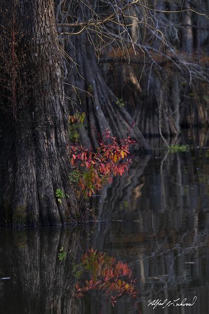 A Bit of Autumn_MG_7015