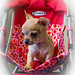 Ebony in the doll's stroller. 18/1/21