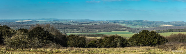 Looking west from above Kingley Vale to the South Downs.