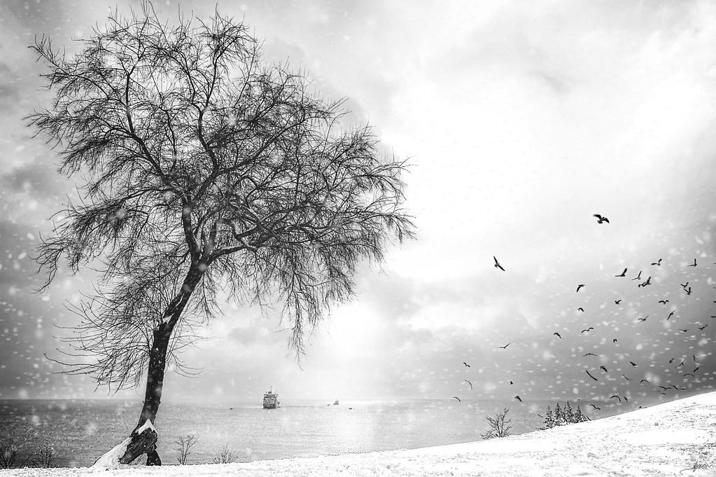 Sea, Sun and Snow