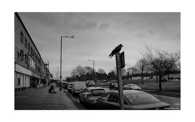 Crow Lane