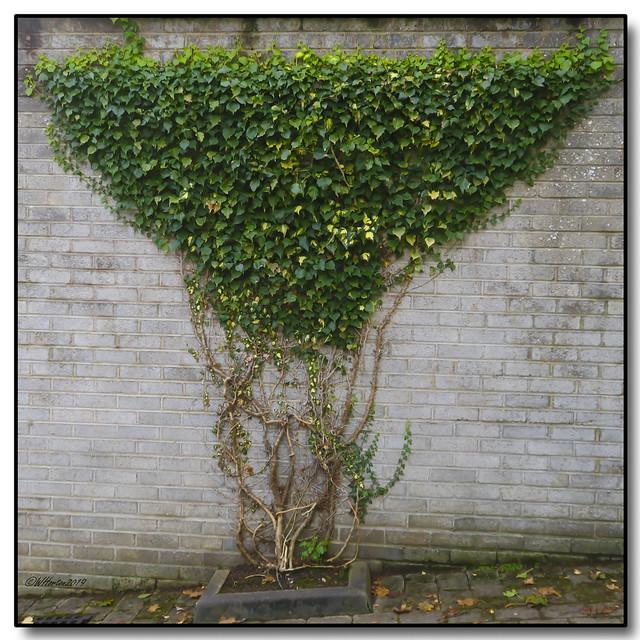 4-Letterkenny, Ireland - Wall Garden Art