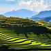 Terraced fields in Tua Chua district, Dien Bien province, Vietnam