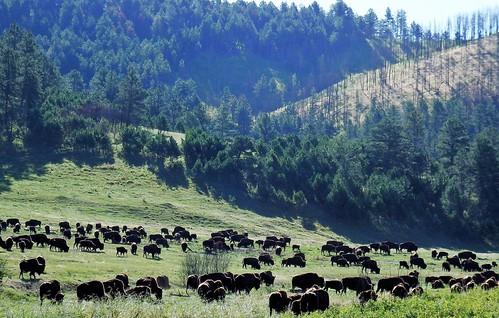 South Dakota - Custer State Park - Landscape - Explored