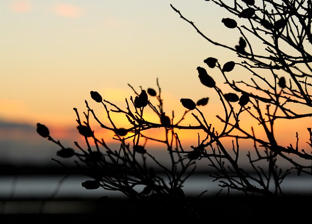 Pale January sunset