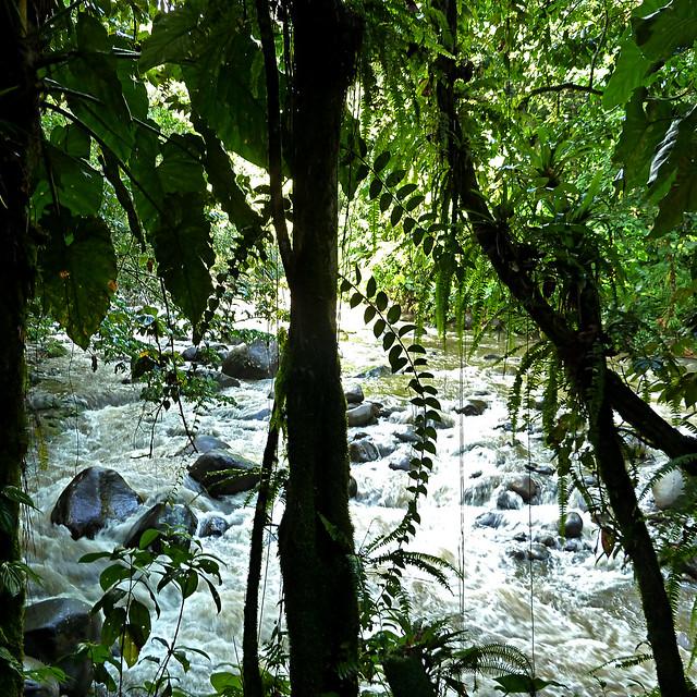 Cascade aux écrevisses, Guadeloupe, France