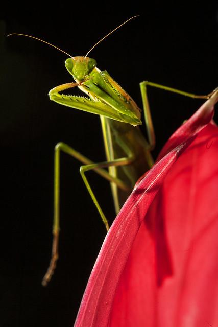Mantis #23
