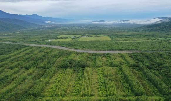 花蓮光復鄉台糖糖廠自2004年起不再製糖,原有蔗田已轉型成1250公頃的大農大富平地森林,平坦且容易親近的場域,適合推動結合鄰近里山社區辦理森林療癒活動的良好基地。圖片提供:林試所