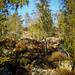 "<p><a href=""https://www.flickr.com/people/hellisa/"">Breitheal</a> posted a photo:</p>  <p><a href=""https://www.flickr.com/photos/hellisa/50849145808/"" title=""Forêt de Fontainebleau""><img src=""https://live.staticflickr.com/65535/50849145808_9abd75aeb9_m.jpg"" width=""180"" height=""240"" alt=""Forêt de Fontainebleau"" /></a></p>"