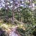 "<p><a href=""https://www.flickr.com/people/hellisa/"">Breitheal</a> posted a photo:</p>  <p><a href=""https://www.flickr.com/photos/hellisa/50849150933/"" title=""Forêt de Fontainebleau""><img src=""https://live.staticflickr.com/65535/50849150933_172b1f90ee_m.jpg"" width=""240"" height=""179"" alt=""Forêt de Fontainebleau"" /></a></p>"