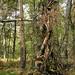 "<p><a href=""https://www.flickr.com/people/hellisa/"">Breitheal</a> posted a photo:</p>  <p><a href=""https://www.flickr.com/photos/hellisa/50849151323/"" title=""Forêt de Fontainebleau""><img src=""https://live.staticflickr.com/65535/50849151323_8b6014b2f5_m.jpg"" width=""178"" height=""240"" alt=""Forêt de Fontainebleau"" /></a></p>"