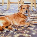 Puppy Cody 01-18-2021