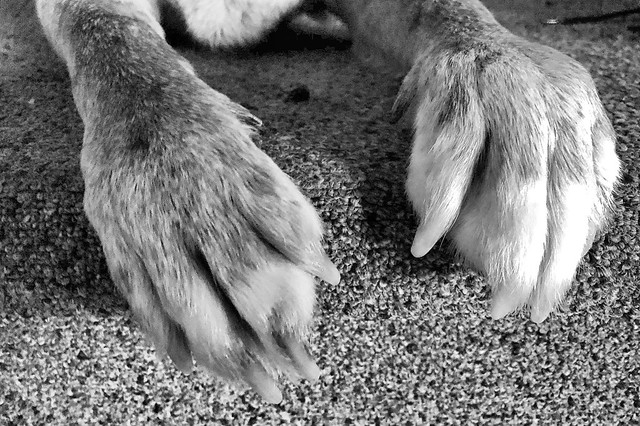 2021/365/17 These Paws Were Made for Walkin'