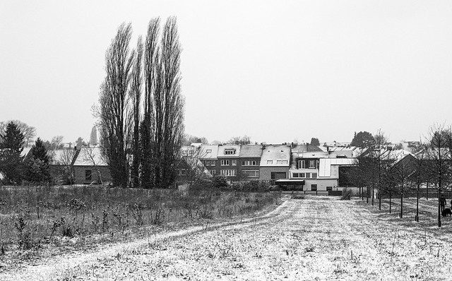 Winter in Koningslo