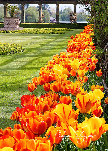 Hever Castle Italian Garden, Kent, England