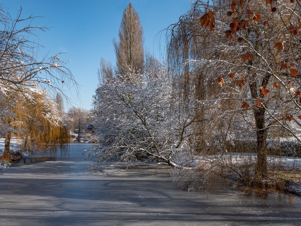 Le canal du parc est gelé... 50849608426_098638b048_b