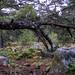 "<p><a href=""https://www.flickr.com/people/hellisa/"">Breitheal</a> posted a photo:</p>  <p><a href=""https://www.flickr.com/photos/hellisa/50849873781/"" title=""Forêt de Fontainebleau""><img src=""https://live.staticflickr.com/65535/50849873781_12e27da1e4_m.jpg"" width=""240"" height=""180"" alt=""Forêt de Fontainebleau"" /></a></p>"