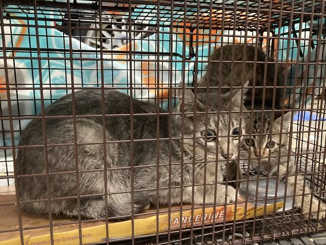 4540southridgepines01cr mom cat