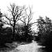 "<p><a href=""https://www.flickr.com/people/hellisa/"">Breitheal</a> posted a photo:</p>  <p><a href=""https://www.flickr.com/photos/hellisa/50849958897/"" title=""Forêt de Fontainebleau""><img src=""https://live.staticflickr.com/65535/50849958897_b5814fa67c_m.jpg"" width=""240"" height=""180"" alt=""Forêt de Fontainebleau"" /></a></p>"
