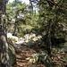 "<p><a href=""https://www.flickr.com/people/hellisa/"">Breitheal</a> posted a photo:</p>  <p><a href=""https://www.flickr.com/photos/hellisa/50849965797/"" title=""Forêt de Fontainebleau""><img src=""https://live.staticflickr.com/65535/50849965797_a24421cbbd_m.jpg"" width=""179"" height=""240"" alt=""Forêt de Fontainebleau"" /></a></p>"
