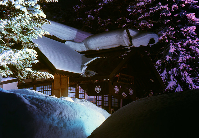 Sacred trees and snow