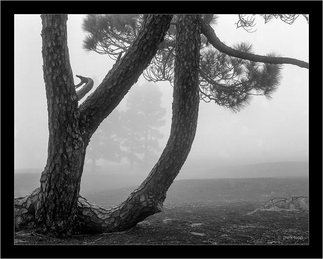 La Palma, Llano del Jable, 4x5