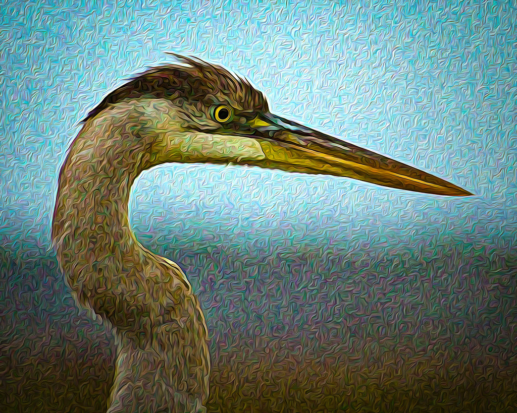 2021.01.03 Sweetwater Wetlands Great Blue Heron 1 art