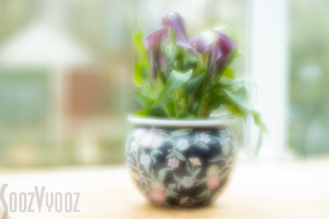 A Bowl of Calla Lilies