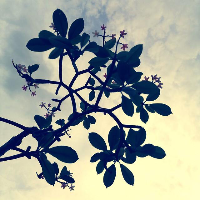 018: under a dappled sky, a bittersweet flower drops
