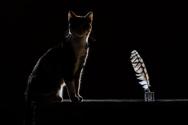 IMG_1320_El gato escritor