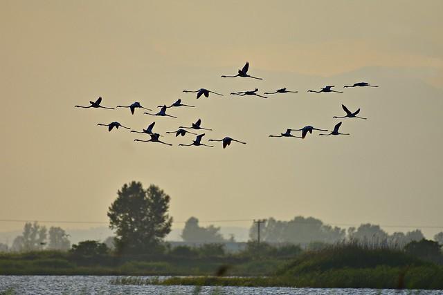 21 Flamingos