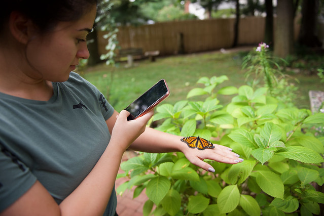 Photographing a Monarch!