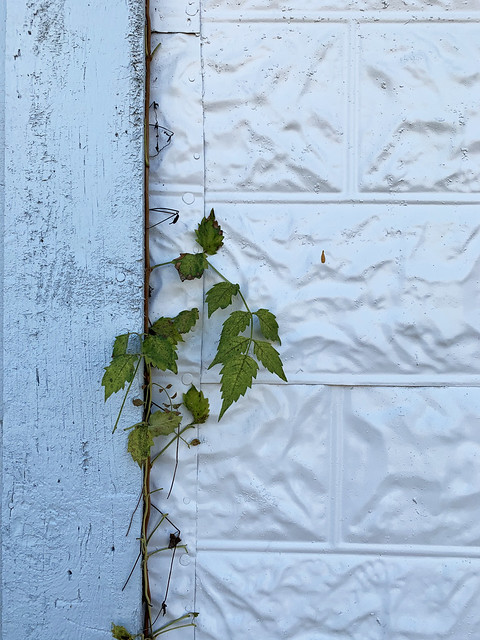 White exterior with a green vine - Explore!